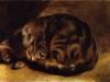 Renoir - Sleeping Cat 1862