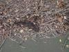 Plum Grove Park Debris